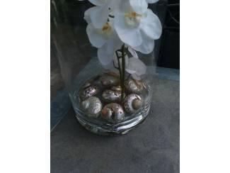 Diverse Advertenties Grote vazen met orchidee erin nieuw!!!!!