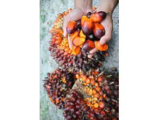 palmolie voor koken, biodiesel en ander gebruik